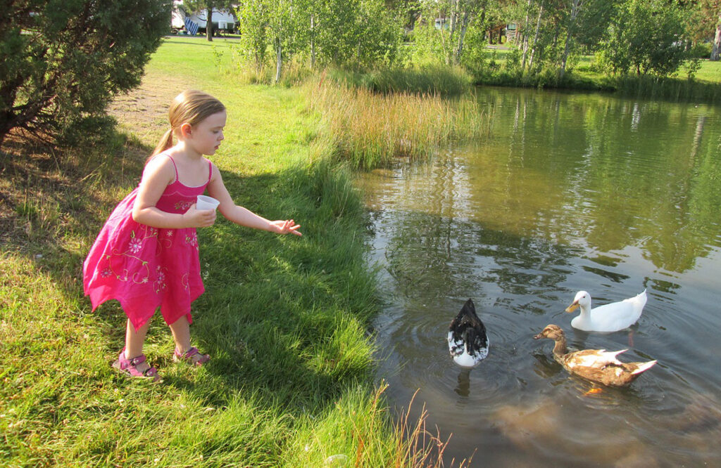 Family Outdoor Activities Duck Feeding