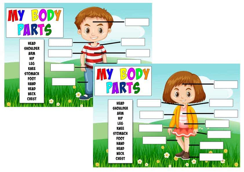learn_body_parts Learn Your Body Parts Activity Sheets